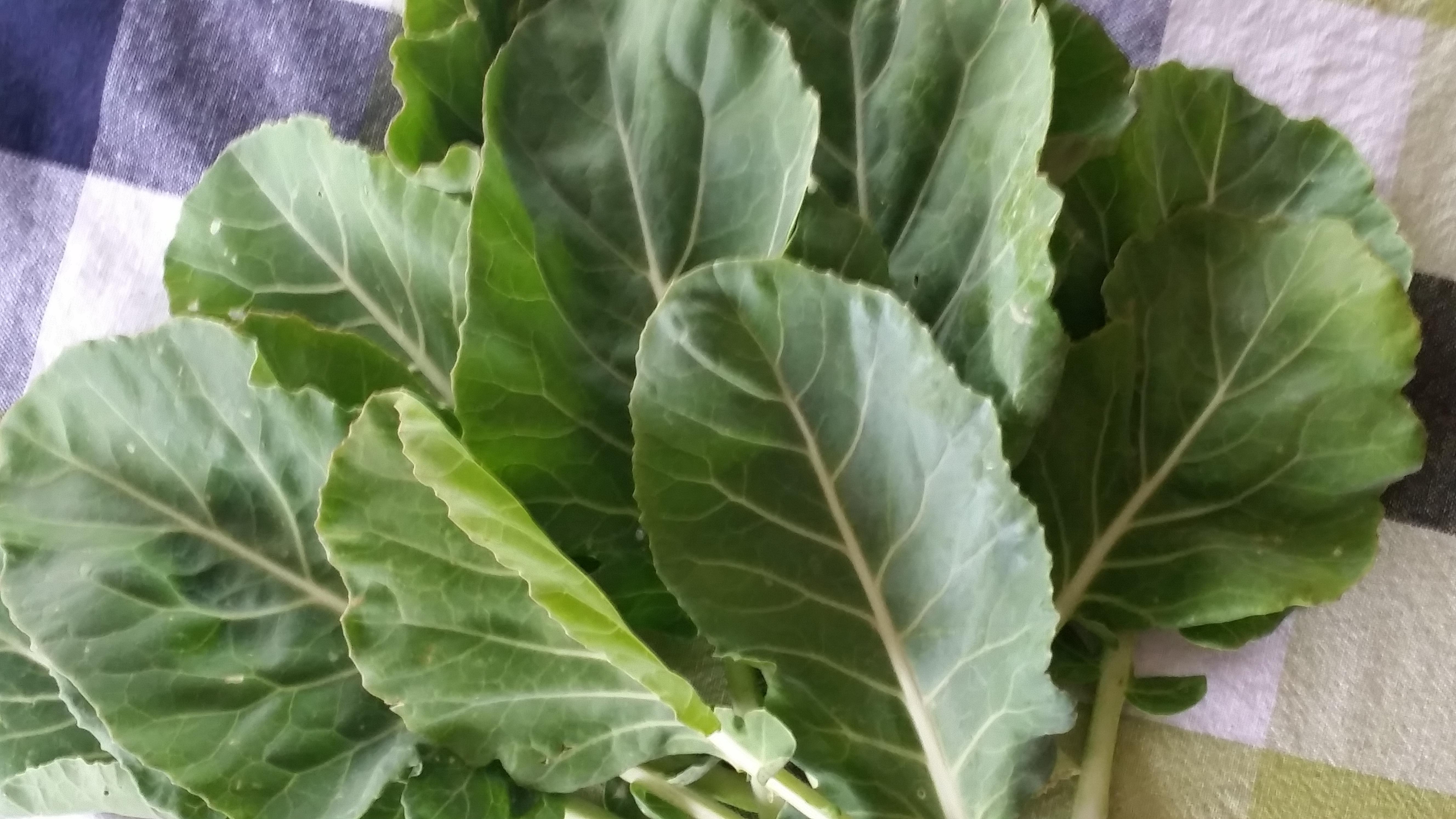 collard greens 2
